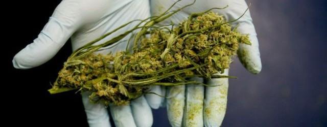 med-marijuana-640x250