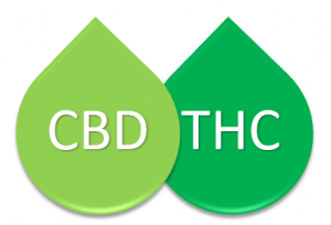 CBD and THC: How They Interact