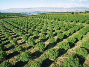 Beyond CBD: Demystifying Phytocannabinoids