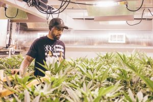 Cannabis Industry: A Place for Every Color?