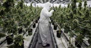 Now A Cannabis Degree to Make You an Analyst