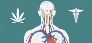 How the Endocannabinoid System Affects Your Health
