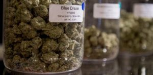 Buying Recreational Marijuana: All You Need to Know
