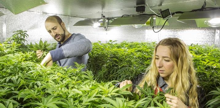 Legal Weed Market Favors Big Businesses