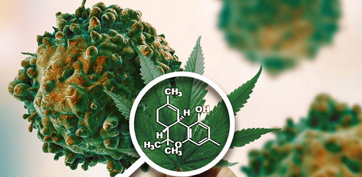 What Science Says About Cannabis and Cancer Cure