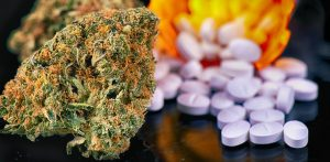 Medical Cannabis May Be Used for Opioid Crisis Here