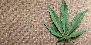 FDA Approved: First Cannabis Medicine for Epilepsy