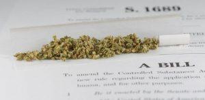 Senate Panel Criticizes Cannabis' Schedule 1 Barrier