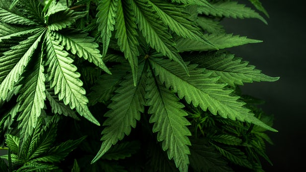 This Is How Cannabis Reduces Intestinal Inflammation