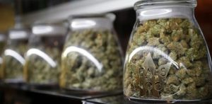 Canadian Doctors Want Medical Cannabis Phased Out After Legalization
