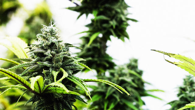 personalized-marijuana-2