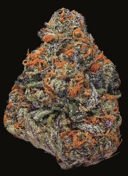 Blueberry-Afgoo1