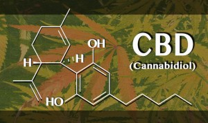 CBD Research to be Accelerated, Potential Therapeutic Value Found
