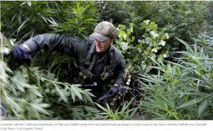Gov. Jerry Brown Signs Law Aimed at Illegal Marijuana Growing Operations
