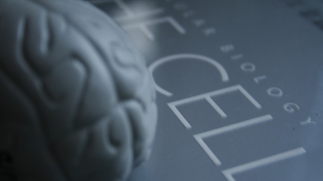 effect-on-brain-cells