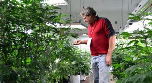 Eric Jacobson, a hydroelectric power plant designer, inspects pot plants. In December, he closed on a 40-acre certified-organic herb farm in Ridgway, where a Front Range hash oil manufacturer is planning to grow organic pot. (Jason Blevins, The Denver Post)