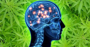 Calming Effect of Medical Cannabis Can Save Lives