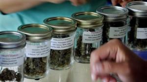 Some of the types of marijuana available at a marijuana cooperative in San Diego. (Eduardo Contreras / San Diego Union-Tribune)