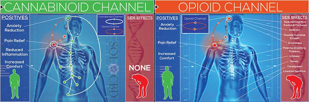 Opioid-VS-Cannabinoid