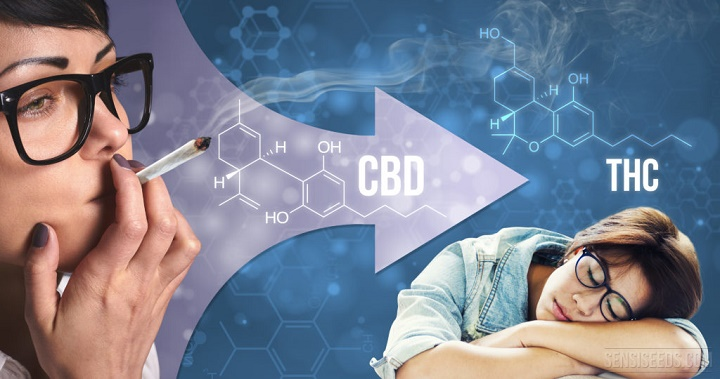 cbd-to-counter-thc