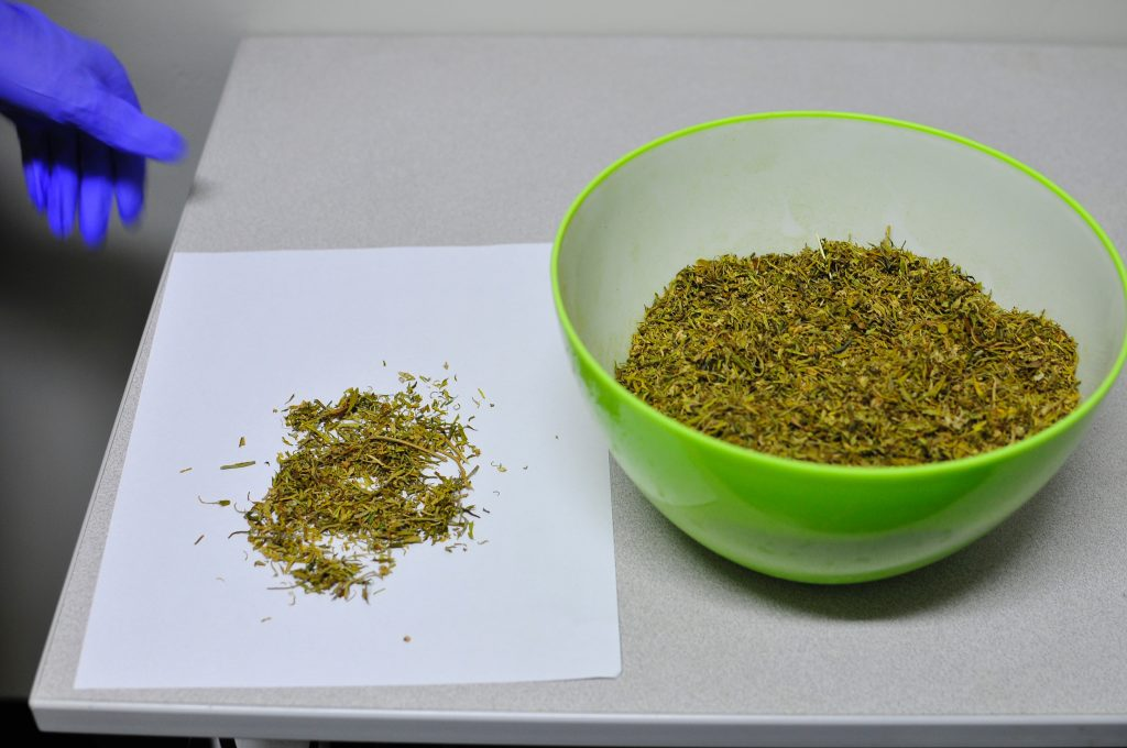 A researcher in Dr. Sue Sisley's lab prepares to weigh a sample of marijuana received from the federal facility responsible for growing marijuana for clinical research. Photo courtesy of MAPS.