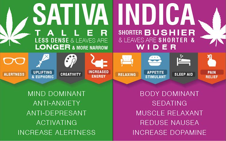 difference-indica-sativa-1