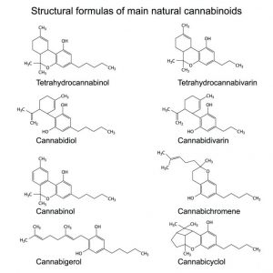 cbc-cannabinoids