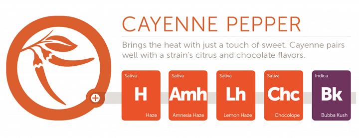 cayenne2x