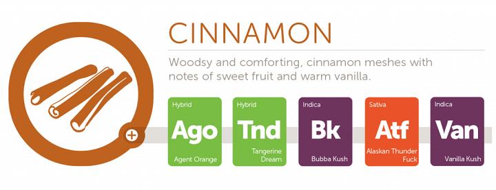cinnamon2x