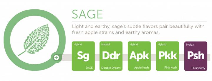 sage2x