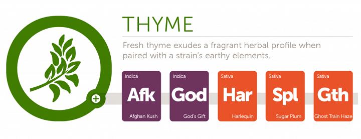 thyme2x