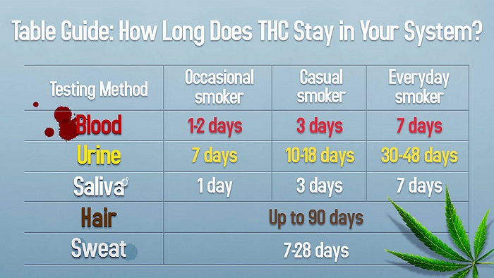 how-long-thc-stays-in-system-table