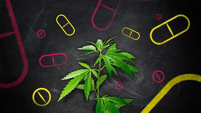 marijuana-vs-drugs-headache