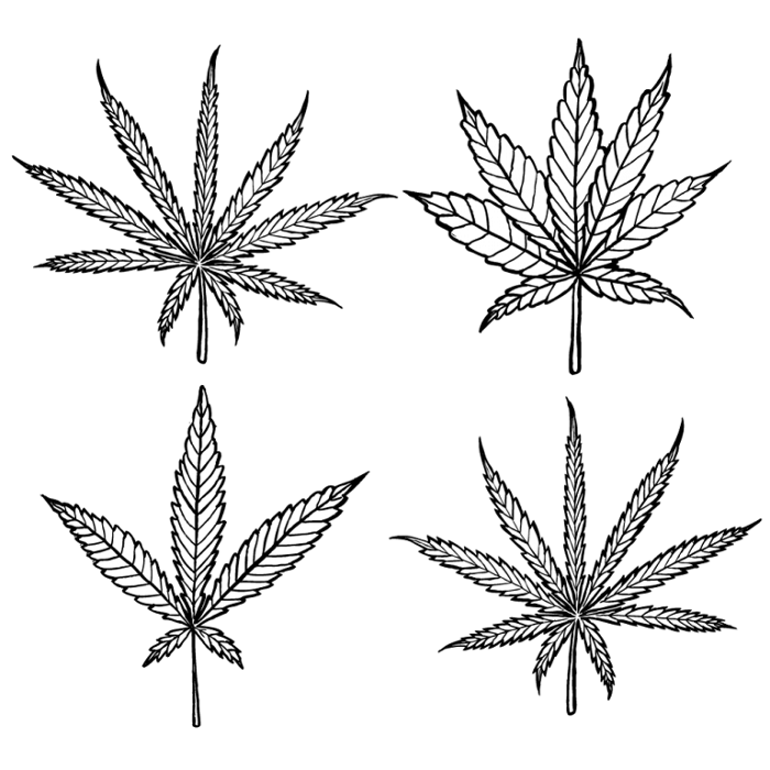 types-of-cannabis-768x768