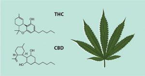 Endocannabinoid System: Cannabinoids THC and CBD