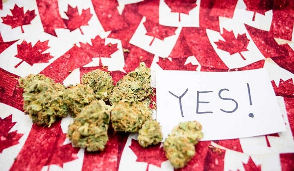 10 Cannabis Stories: Canada's $10 Dank