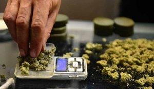 10 Cannabis Stories: Golden State, Golden Opportunities