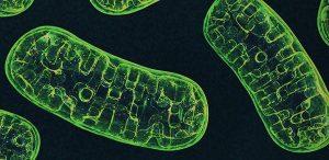 How CBD Affects Metabolism