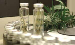 The big question that needs to be answered: medical cannabis offers benefits or not?