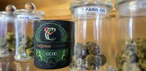 Colorado's Legal Marijuana Safe for Now from Feds