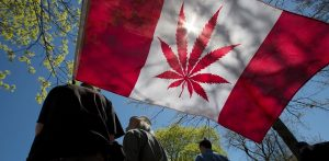 Canada Gets Ready for Legal Cannabis, World Watches