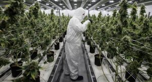 Here's the Best Part About Legal Weed in Canada
