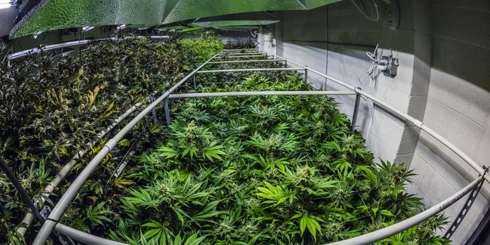 What Is Driving the Marijuana Industry Boom?