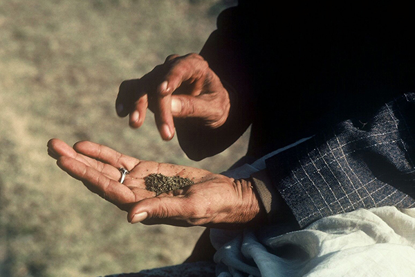 The Ancient Origins of Cannabis - The Silk Road in Central Asia.