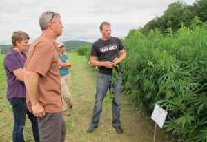 New York became a leader in hemp research and established industrial hemp as an agricultural commodity.