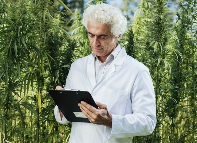 The U.S. federal government stymies cannabis research.