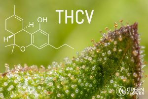 A Cannabinoid That Helps Prevent Type 2 Diabetes