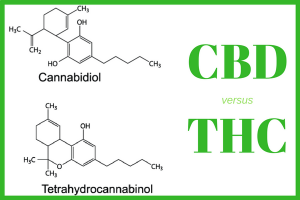 The different ways CBD and THC affect the human body resulted in the strict legislative regulations.