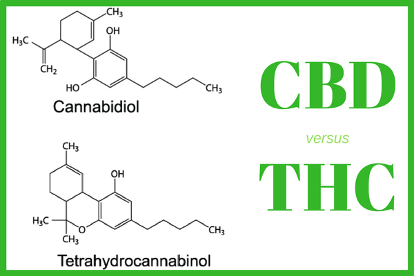 CBD is derived from the hemp variety of cannabis, while THC is usually extracted from marijuana.