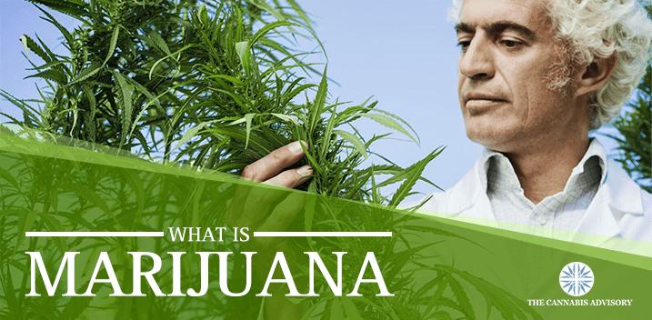 Marijuana-min